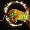 Цирки в Дугне