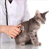 Ветеринарные клиники в Дугне